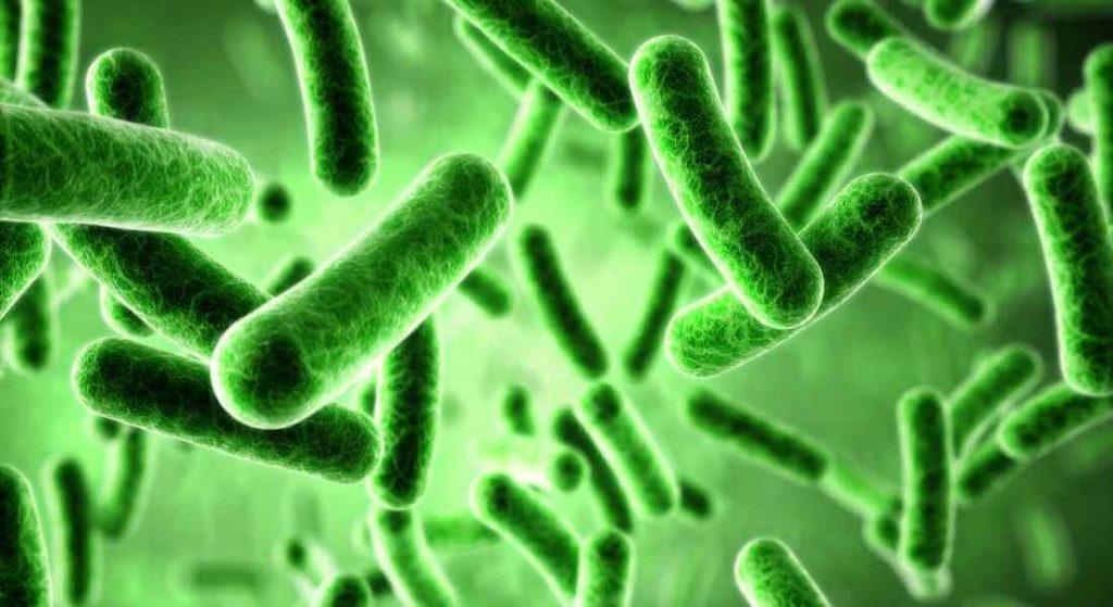 Antibiotika schaden der Darmflora